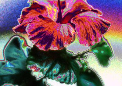 hawaiianrose
